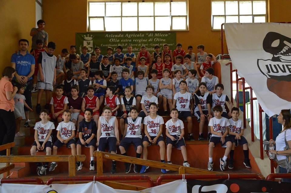 hyppo basket -